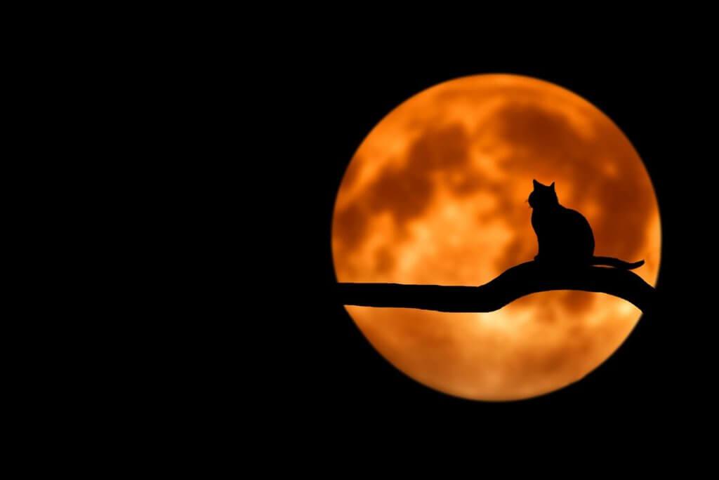 Ảnh nền máy tính đẹp với chú mèo và ánh trăng