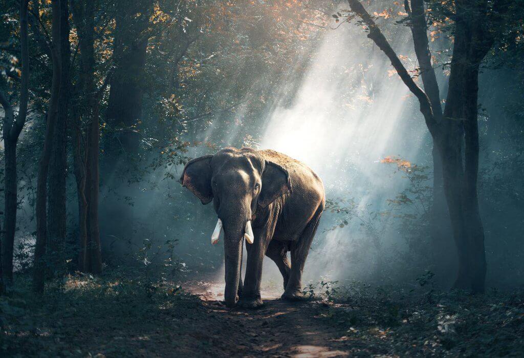 Ấn tượng ảnh về thiên nhiên hoang dã với chú voi