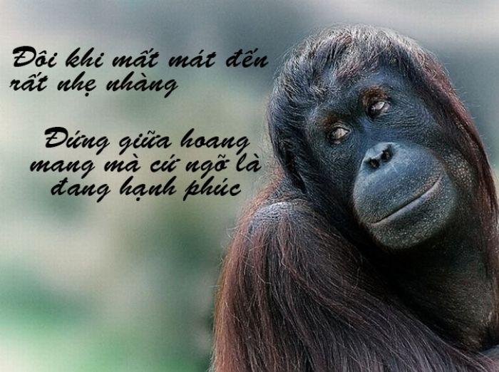 Ảnh chế siêu hài về những chú khỉ