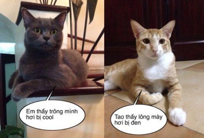 Ảnh vui hài hước của những chú mèo đáng yêu