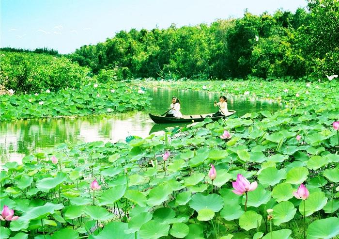 Du lịch Miền Tây sông nước mùa sen nở đẹp và nên thơ