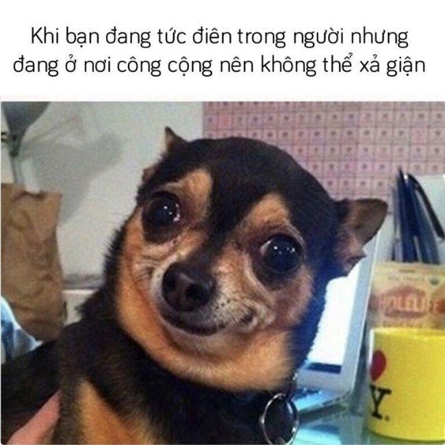 Hình ảnh chế vui nhộn của chú chó đang gượng cười