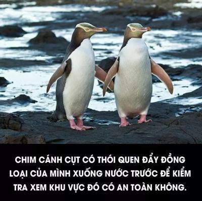 Những hình ảnh hài hước nhất thế giới về động vật