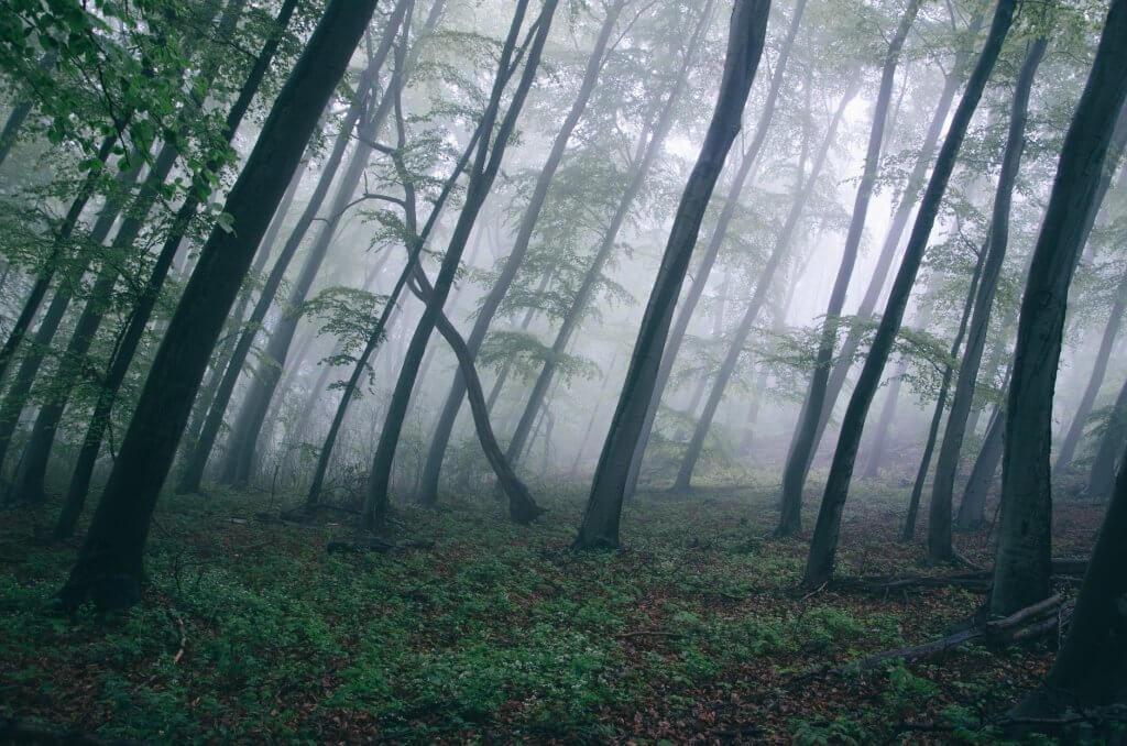 Những hình ảnh về thiên nhiên đẹp mắt