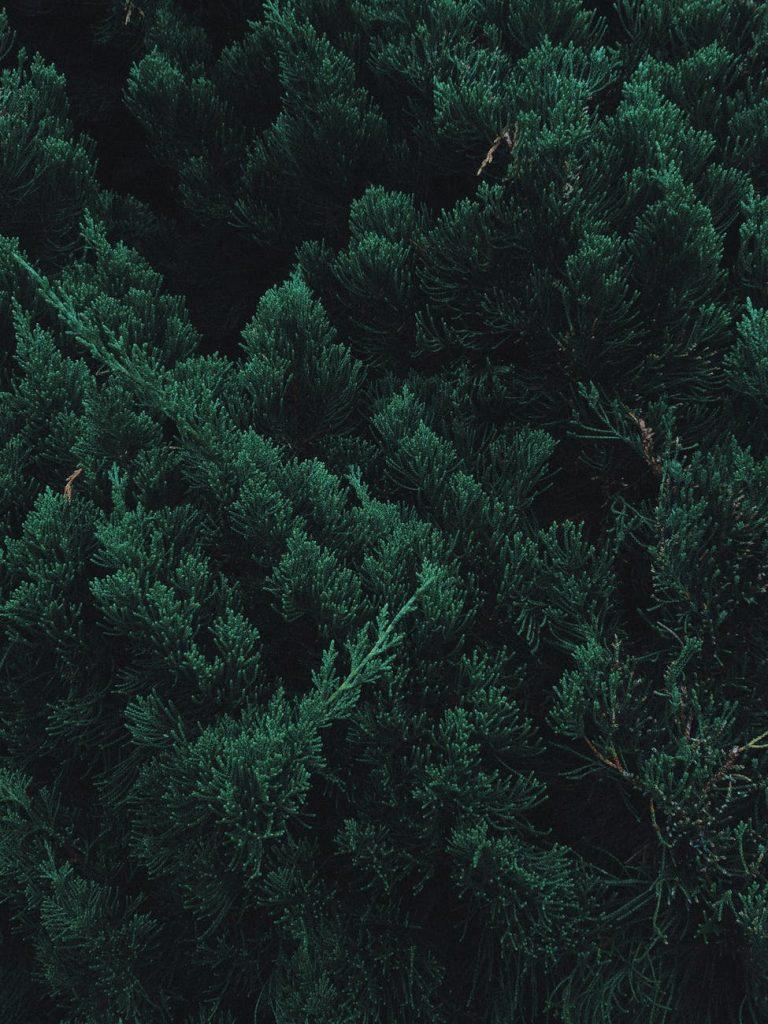 Những hình cảnh thiên nhiên núi rừng xinh đẹp