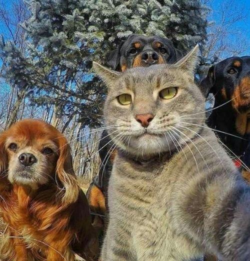 Nhưng hình ảnh hài hước về chú mèo chụp hình