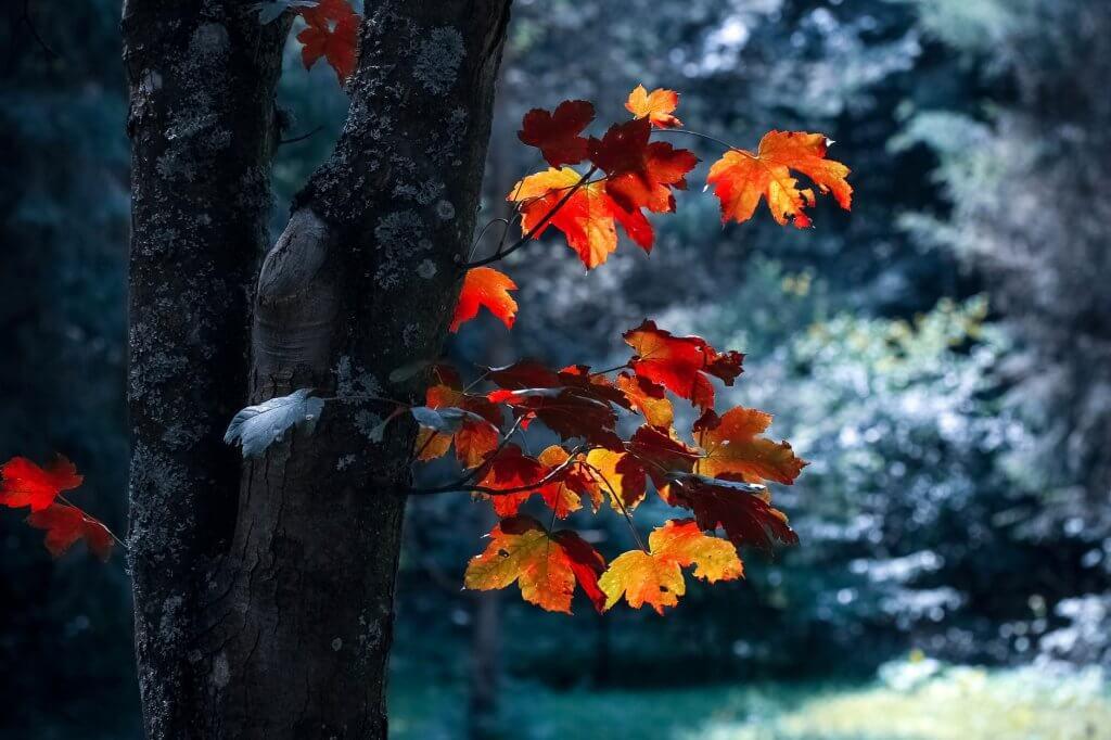 Trọn bộ hình ảnh thiên nhiên đẹp HD không thể cưỡng lại