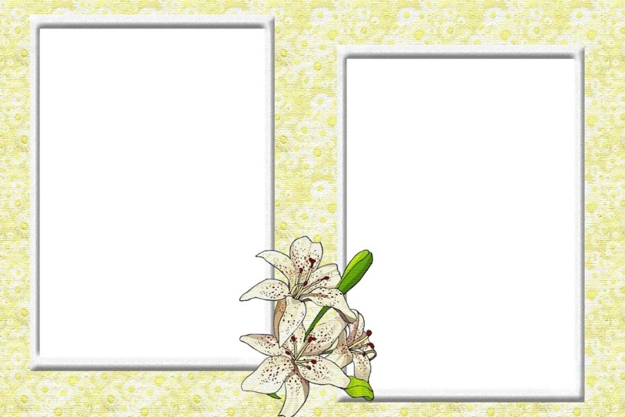 Khung hình photoshop đơn giản màu xanh lá