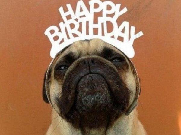 Hình chúc mừng sinh nhật vui đảm bảo cười bò