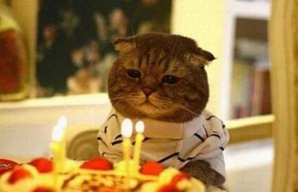 Hình sinh nhật bá đạo dành cho thú cưng của bạn