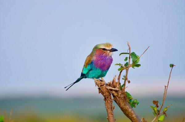 Nằm mơ thấy con chim đánh con gì
