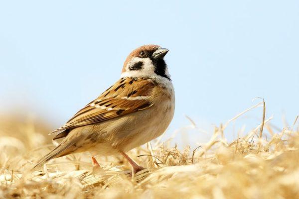 Nằm mơ thấy con chim điềm báo gì