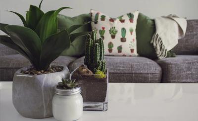 Trang trí bàn trà bằng những chậu cây mini