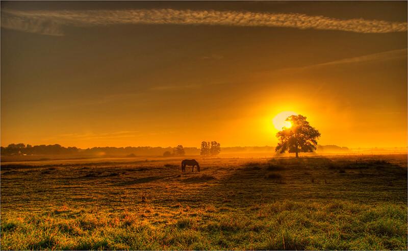 Hình ảnh cảnh đẹp buồn tại một vùng quê