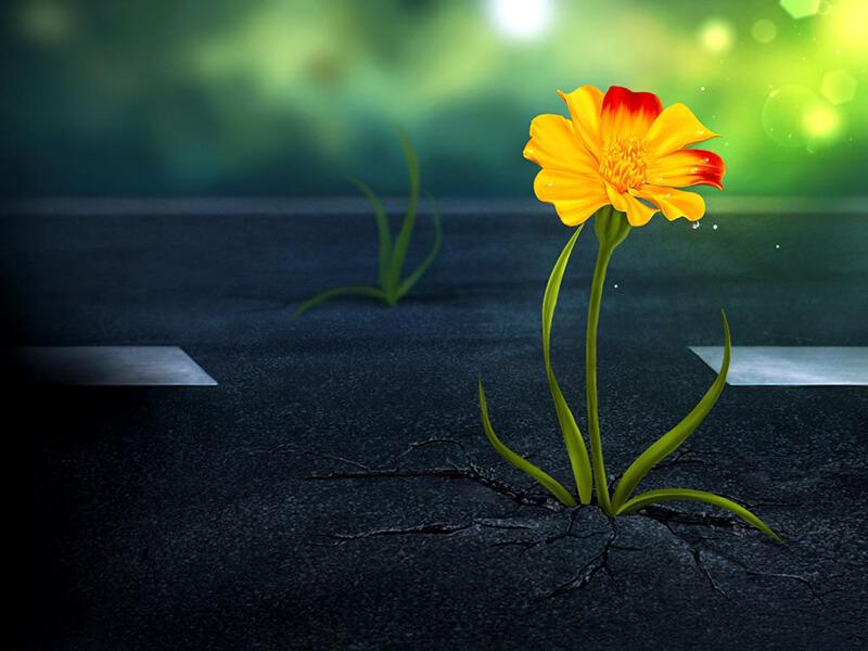Hình ảnh hoa buồn nhất phù hợp với nhiều tâm trạng