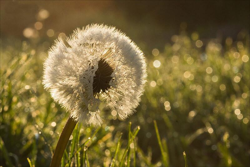 Những ảnh thiên nhiên buồn cô đơn từ hoa