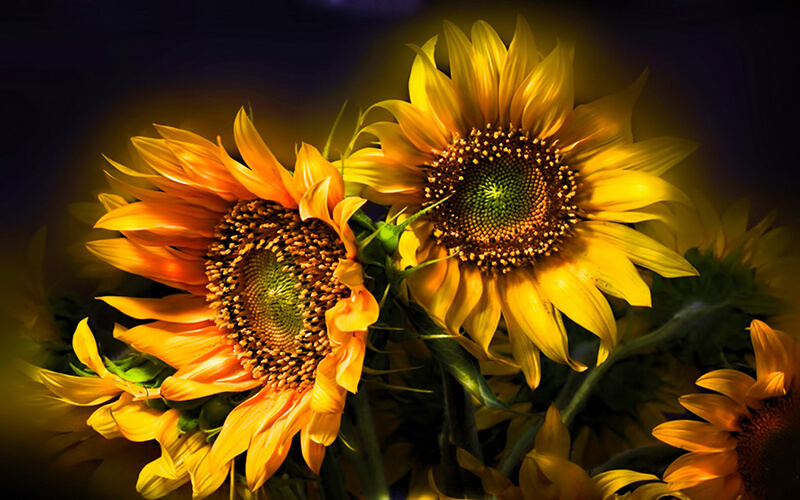 Những hình ảnh hoa buồn man mát lòng
